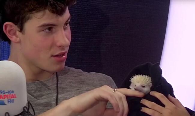 Shawn Mendes singing a hedgehog to sleep